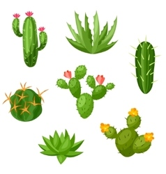 Collection abstract cactuses and plants vector