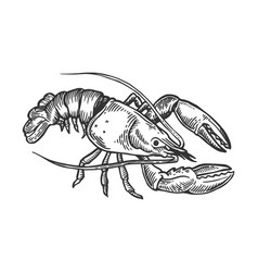 lobster sea animal engraving vector image