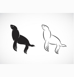 sea lion design on white background true seal or vector image