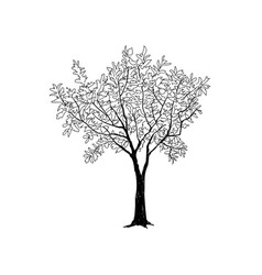 Tree with leaves drawn sketch summer nature sign vector