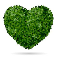 boxwood heart vector image