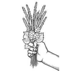 Graphic hand with malt bunch vector