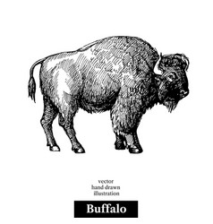 hand drawn sketch animal buffalo american bison vector image