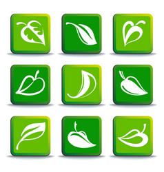 leaves buttons vector image