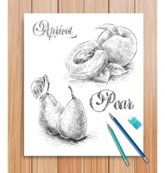realistic sketch of fruits apricot and pear vector image