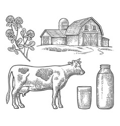 set milk farm cow head clover glass and bottle vector image