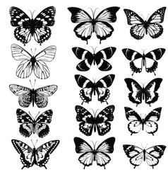 set realistic butterflies for design vector image