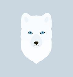 portrait of the arctic fox vector image vector image