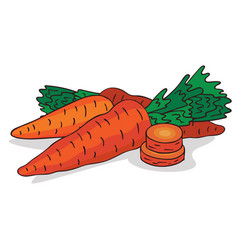 Isolate ripe carrot root vegetable vector