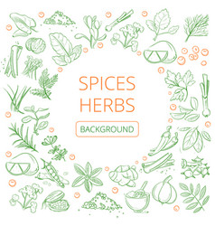 hand drawn herbs and spices healthy natural vector image
