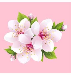 Branch of pink blossoming sakura japanese cherry vector image