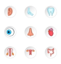 Structure of body icons set cartoon style vector image vector image