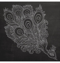 Decorative ornamental peacock chalkboard vector image