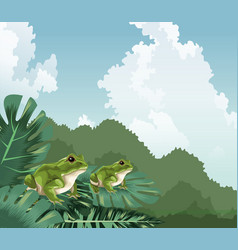Frogs on monstera leaves tropical fauna and flora vector