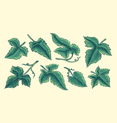 Set grape leaves vineyard plant collection in vector