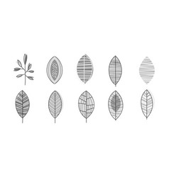 set of monochrome leaves in linear style vector image
