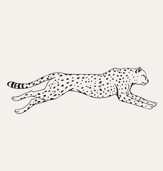 Urning leopard hand drawn vector