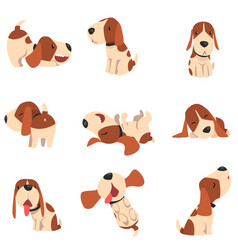 Cute beagle dog in various poses set funny animal vector