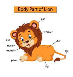 Diagram showing body part lion vector