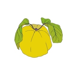 Quince with leaves vector image