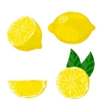 lemon fruits vector image