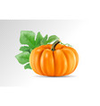 realistic pumpkin isolated on transparency vector image