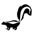 skunk with big tail on white background vector image vector image