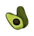 watercolor eco frut line painted avocado colored vector image