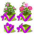 gift green box with pink peonies flower vector image vector image