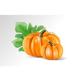 set vegetable pumpkins with green leaves isolated vector image
