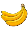 Bunch of three unopened unpeeled ripe bananas vector image