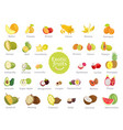 delicious exotic fruits full vitamins big set vector image vector image