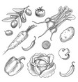 hand drawn vegetables set sketch collection vector image