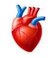 realistic heart blood pump organ with veins vector image vector image