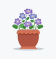 tender violets with bright blossom in big clay pot vector image