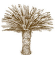 engraving of cycas palm vector image