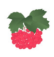 bunch of ripe red viburnum with leaves vector image vector image