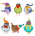 christmas birds collection vector image vector image