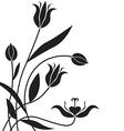 flower bg vector image vector image