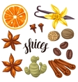 various stylized spices set anise vector image