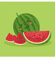 Cute Watermelon Fruit Mascot Green vector image vector image