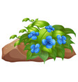 plant with blue flowers on white background vector image vector image