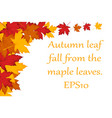 maple leaves background eps10 vector image