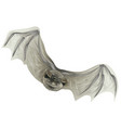bat isolated on white vector image vector image