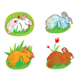 Rabbit in the grass vector image vector image