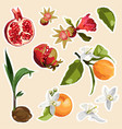 set stickers and icons healthy and organic vector image