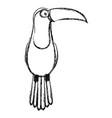 Toucan tropical bird icon vector image