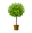 tree in flowerpot vector image vector image