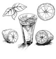 lemon vintage hand draw vector image