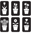 Pot plants set vector image vector image